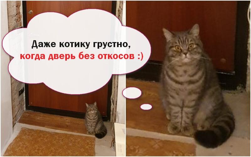 Котику грустно когда нет откосов